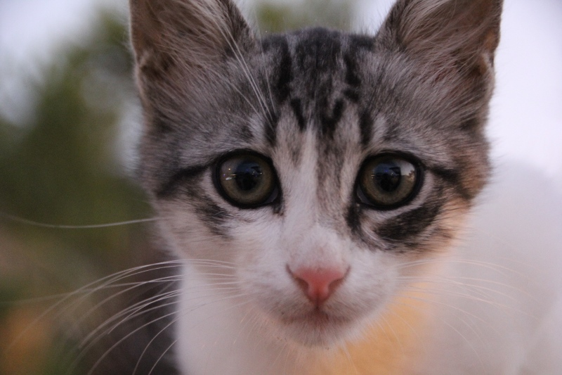 Kahraman Kedi… 3 Can Kurtardı
